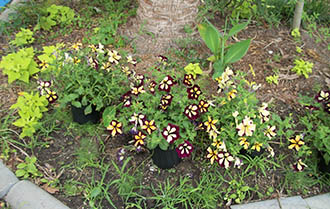 Beautiful flower landscaping at Crystal Lake RV Pak