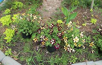 landscapeflower